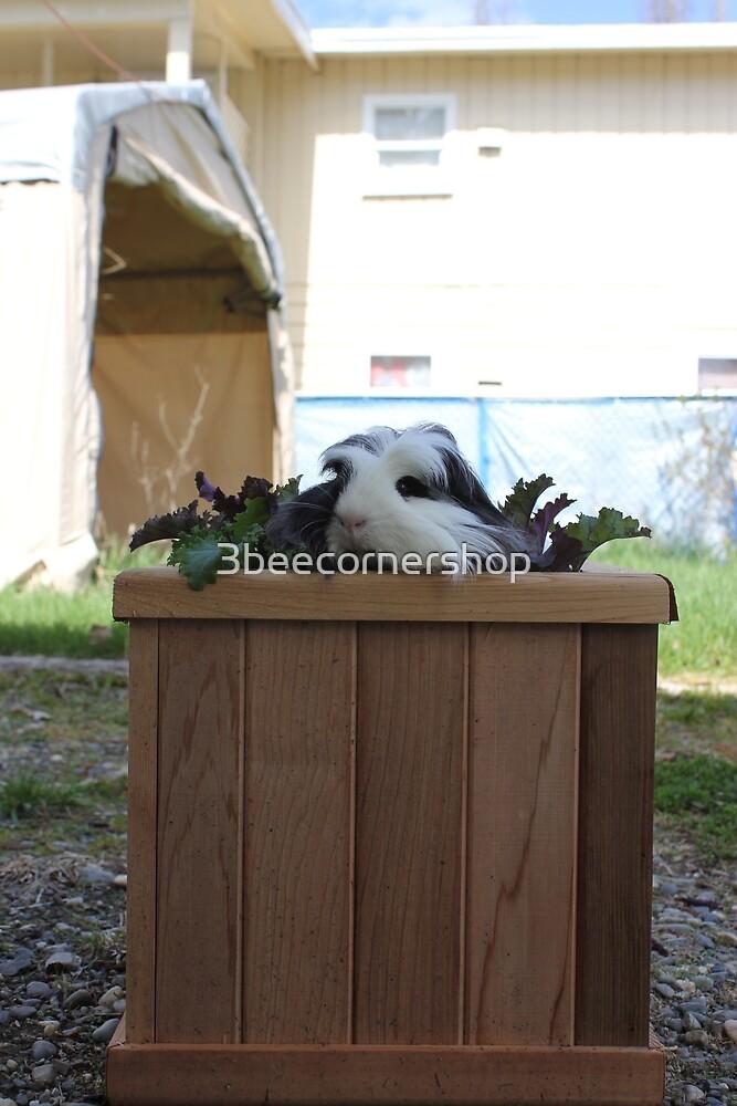 Kale Planter by 3beecornershop