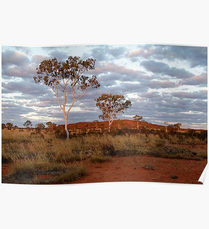 Sunset Ghost Gums,Batton Hill, North Simpson Desert Poster