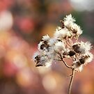 Fall by ewmart