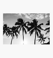 Hawaiian Palms III Photographic Print