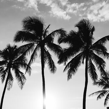 Hawaiian Palms III by bethanyyoung