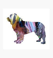 newfoundland dog art  Photographic Print