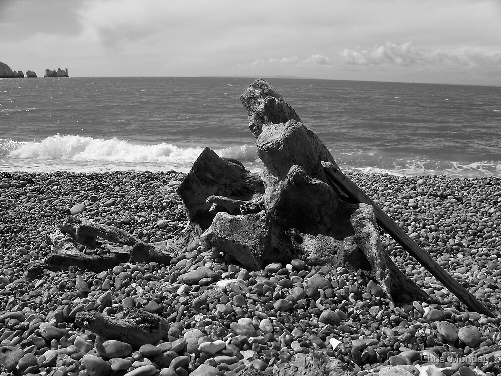 Washed Up by Chris  Munday