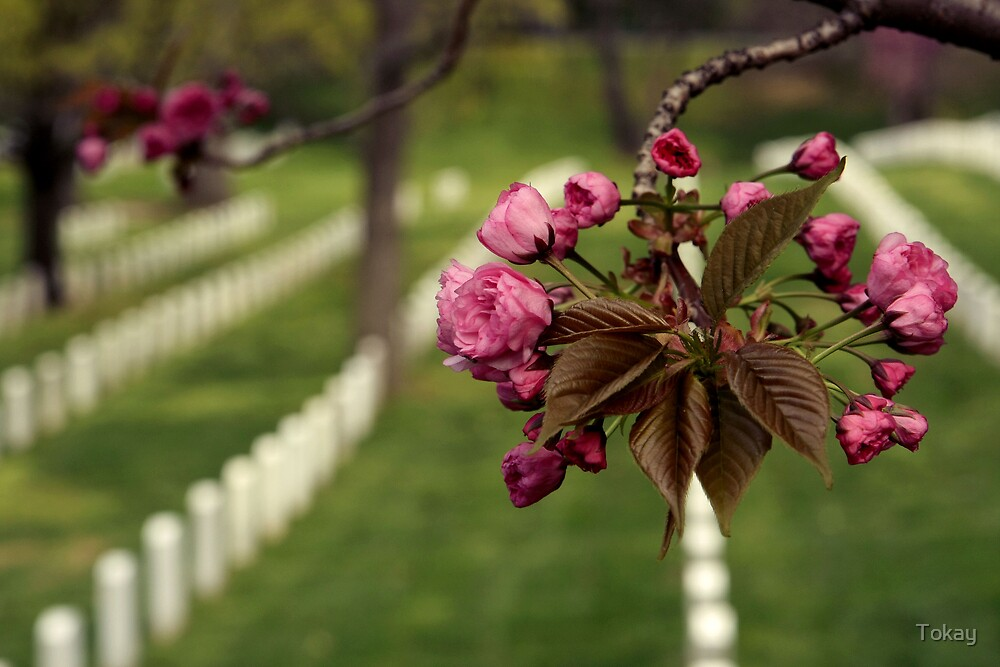 Arlington National Cemetery by Tokay