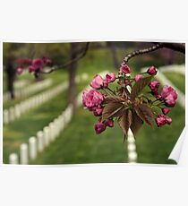 Arlington National Cemetery Poster