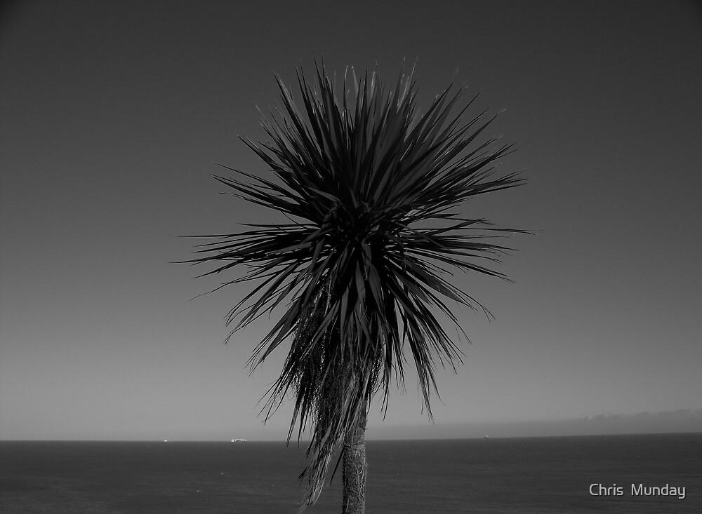 Palm by Chris  Munday