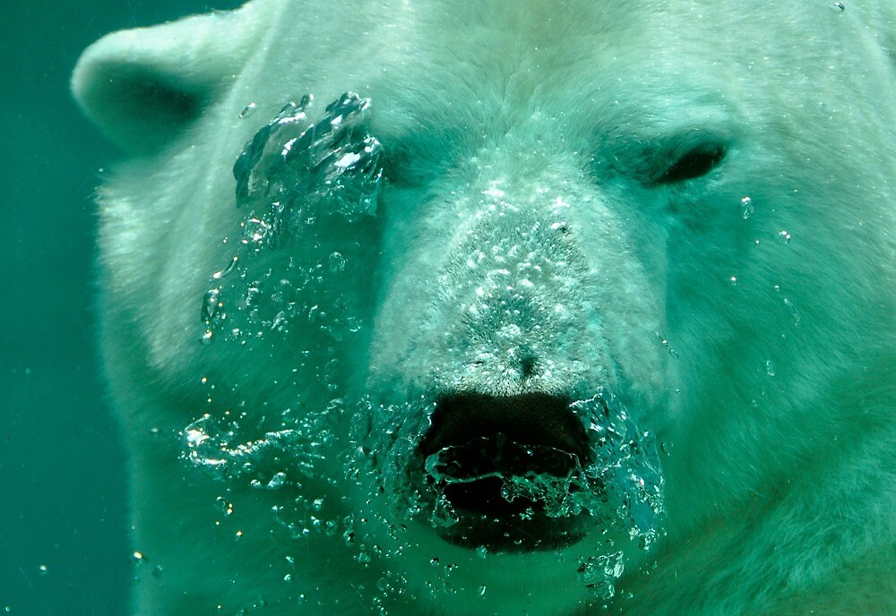 Polar Bear by Rebel-Lizzie