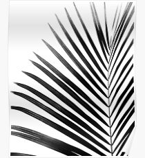 PALM LEAF Black & White Poster