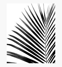 PALM LEAF Black & White Photographic Print