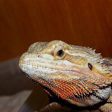 Bearded Dragon by reptilesink
