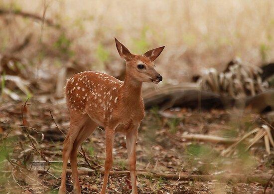 Little deer by miradorpictures