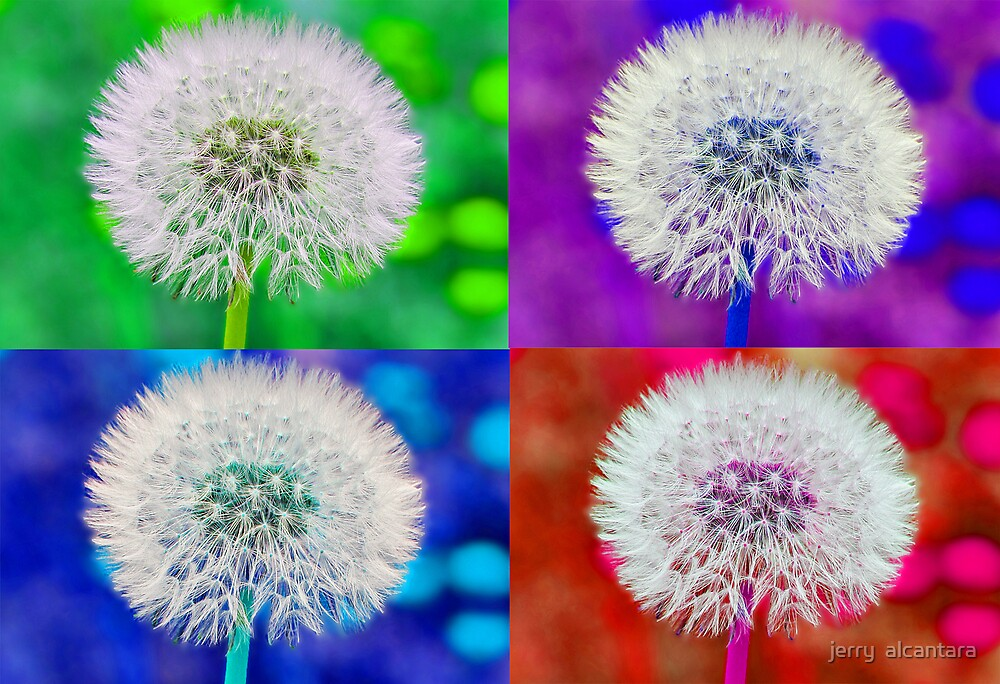 Dandelion colors by jerry  alcantara