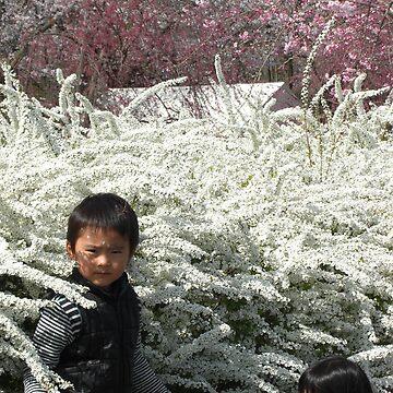 Magnificent Sakura  by mindscribbler