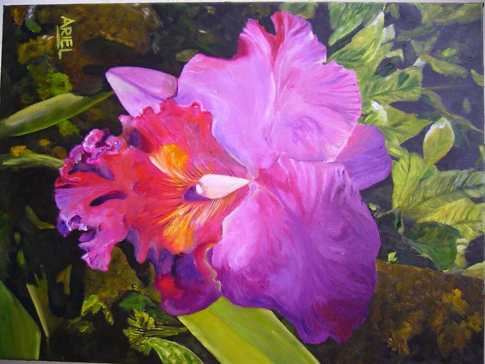 Orchid by ArielMaldonado