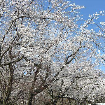 Sakura in Suigen Park2 by mindscribbler