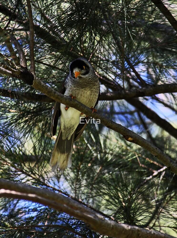 Bird On A Tree by Evita