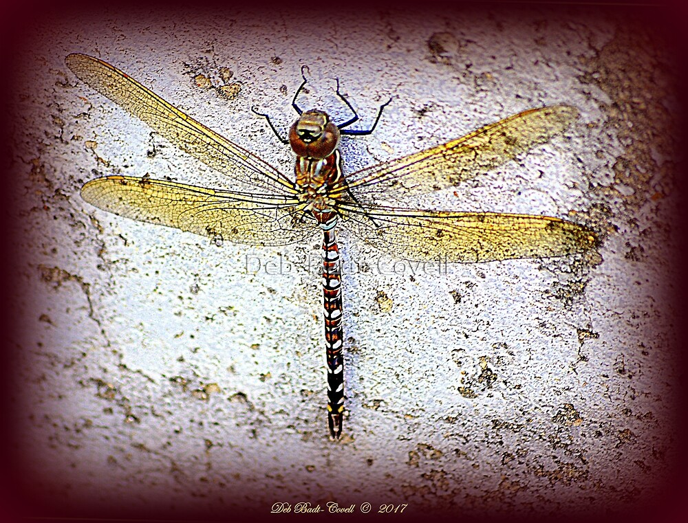 Twin-Spotted Spiketail Dragonfly by Deb  Badt-Covell