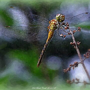 Young Meadowhawk Dragon on a Lilac Tree - Watercolor Effect by Badtgirl