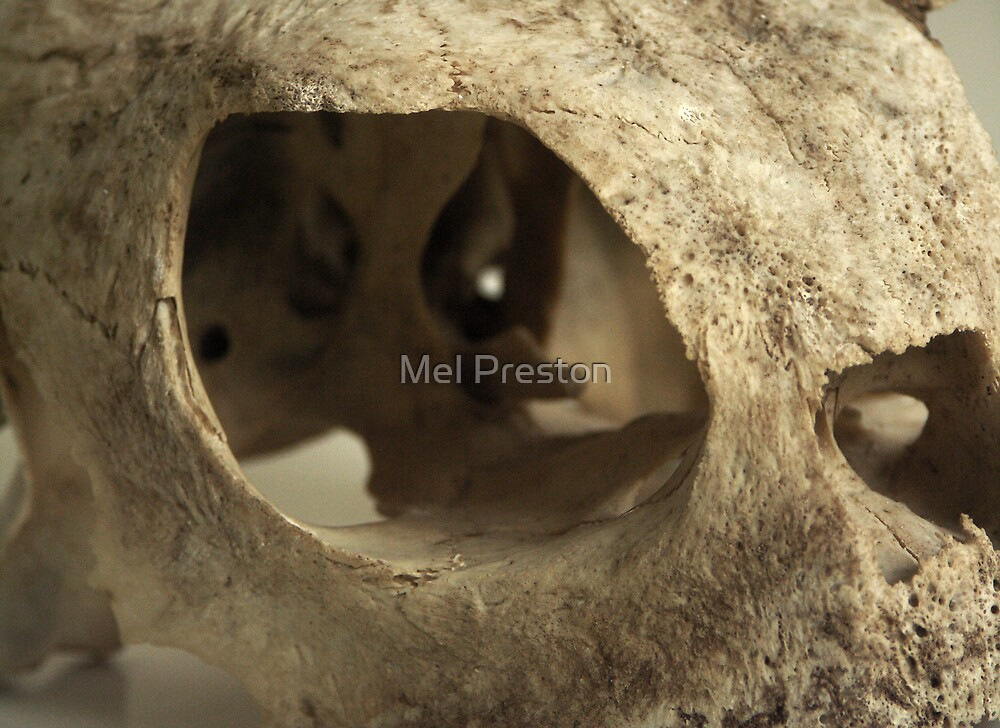 Turtle Skull by Mel Preston