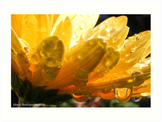 Drops of Sweetness by Stacy Colean