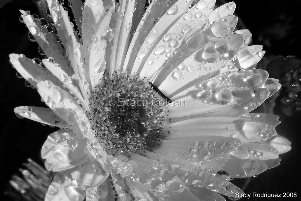 Crying  Flower by Stacy Colean