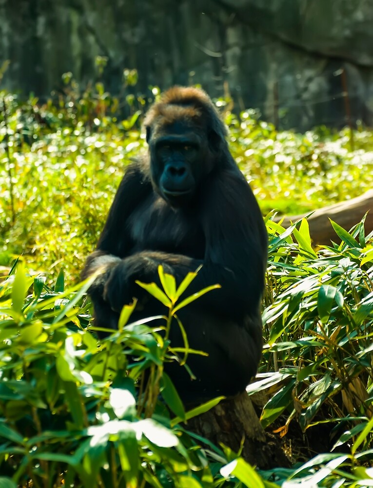 Gorilla sitting on a stump by chrisflees