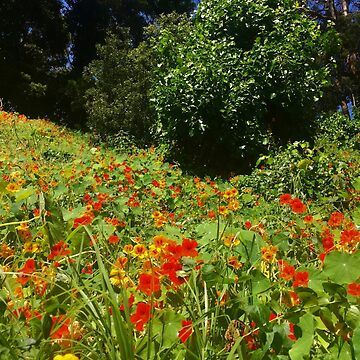 Wild Flowers in Stern Grove by mariethebee