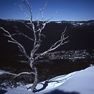 Lonesome Tree,Thredbo,NSW,Australia 1999 by muz2142