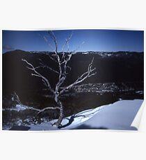 Lonesome Tree,Thredbo,NSW,Australia 1999 Poster