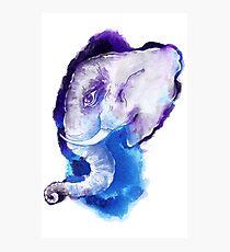 Elephant head.  Photographic Print