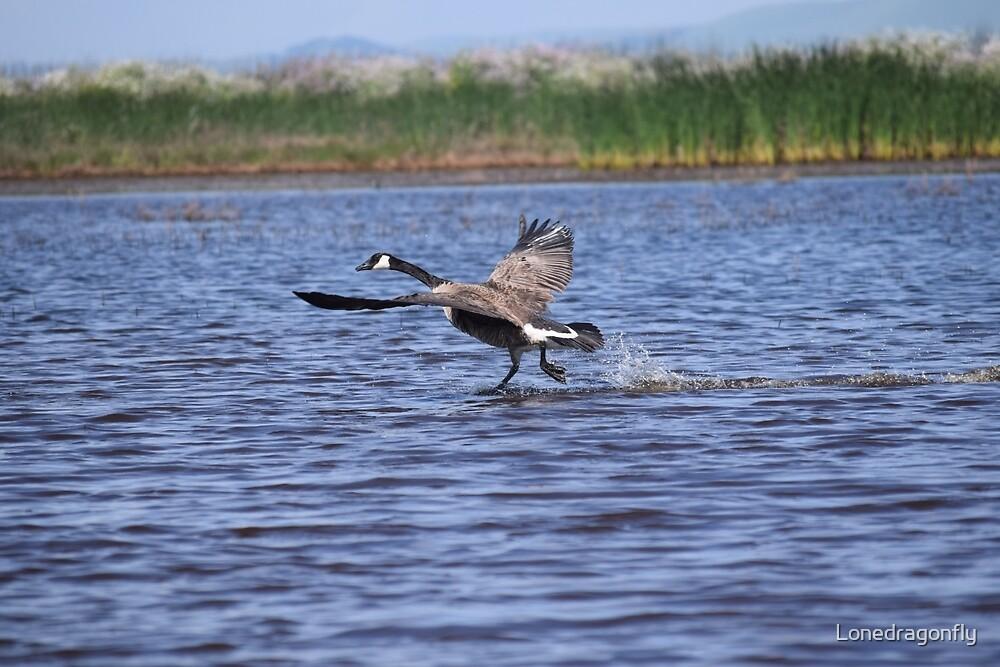 Walking on Water by Lonedragonfly