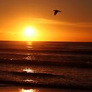 Fly me to the Sun by Deon de Waal