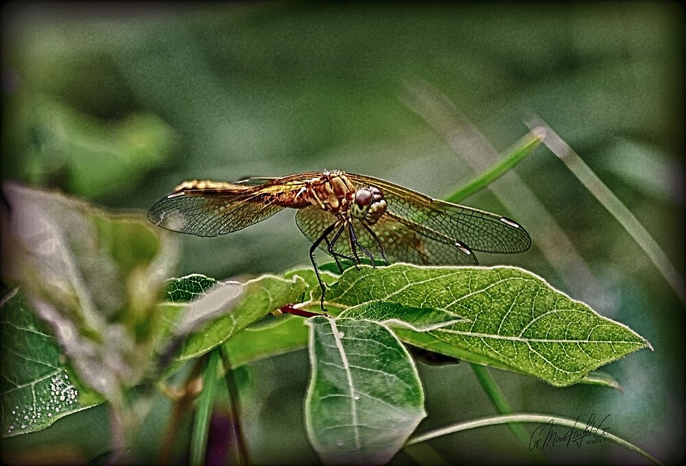 Dragon Fly by GundiMG