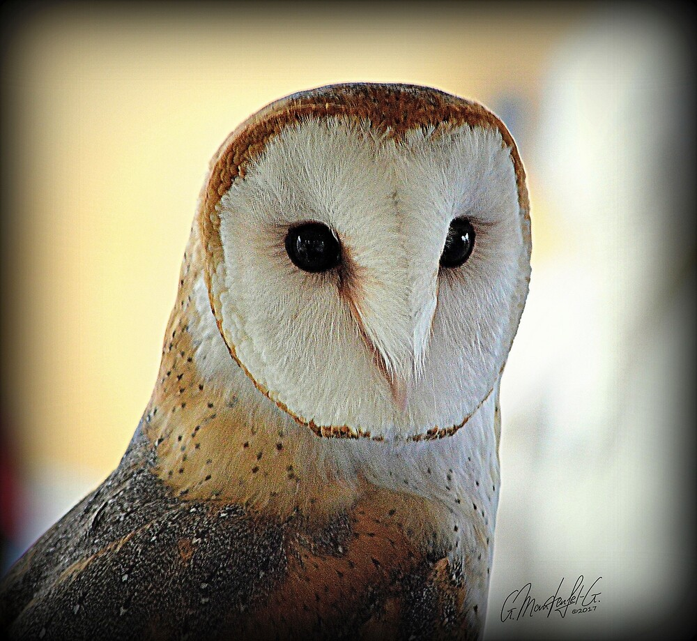 Barn Owl by GundiMG