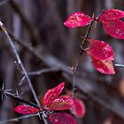 Remaining few leaves by indiafrank