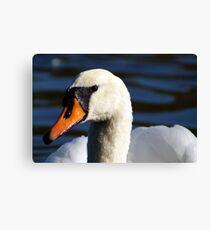 Beautiful swan Canvas Print