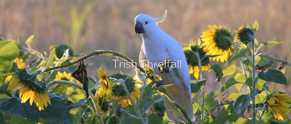 cockatoo and sunflowers by Trish Threlfall