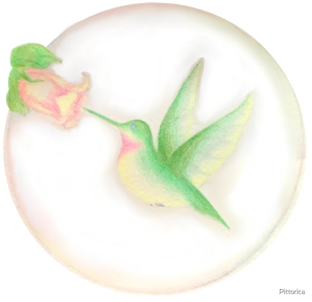 Hummingbird by Pittorica
