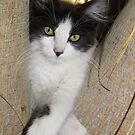 Cute Playful Kitten by Toni Kane