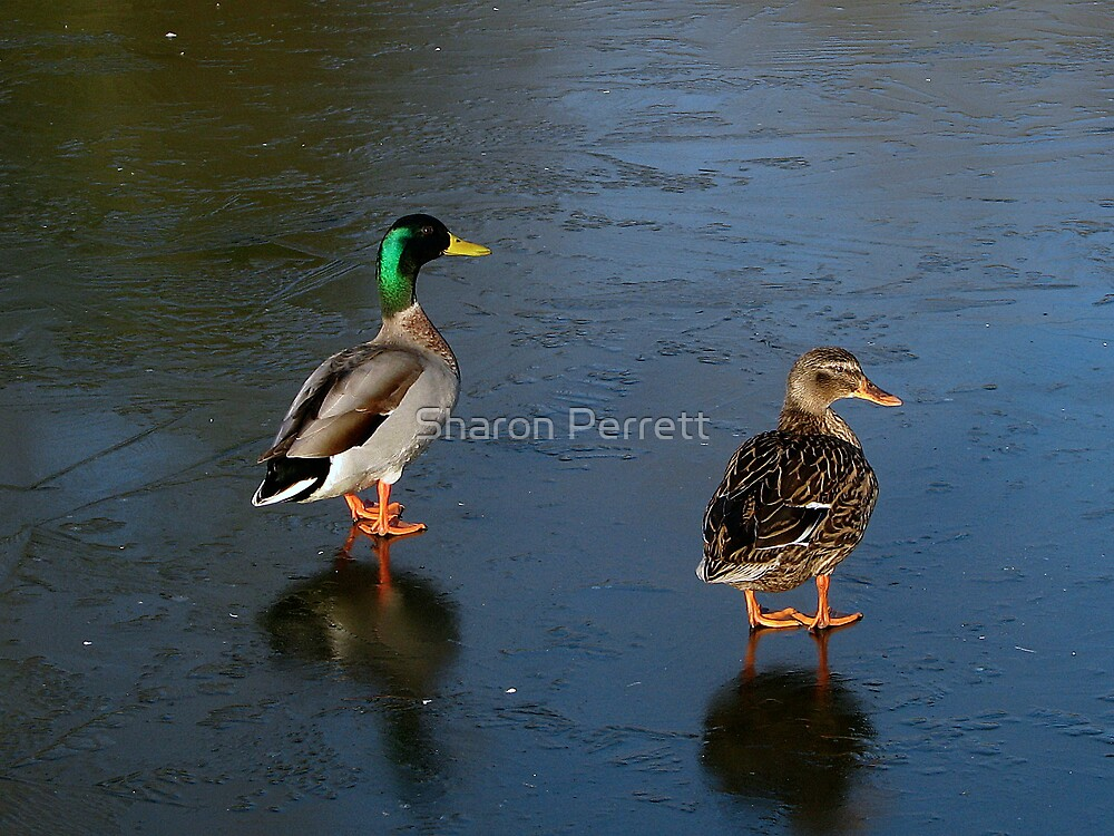 Two contestants for Dancing on Ice by Sharon Perrett
