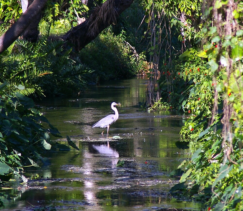 Heron in Creek by julez113