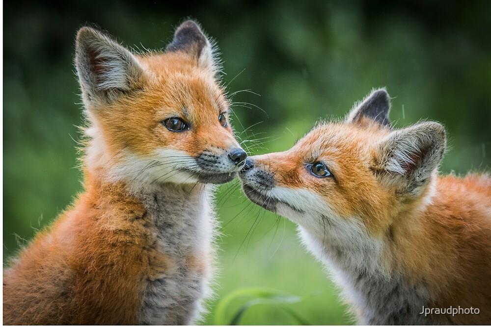 Fox cubs by Jpraudphoto