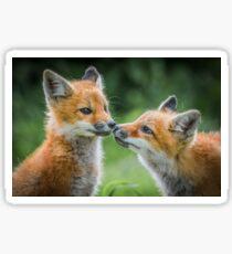Fox cubs Sticker