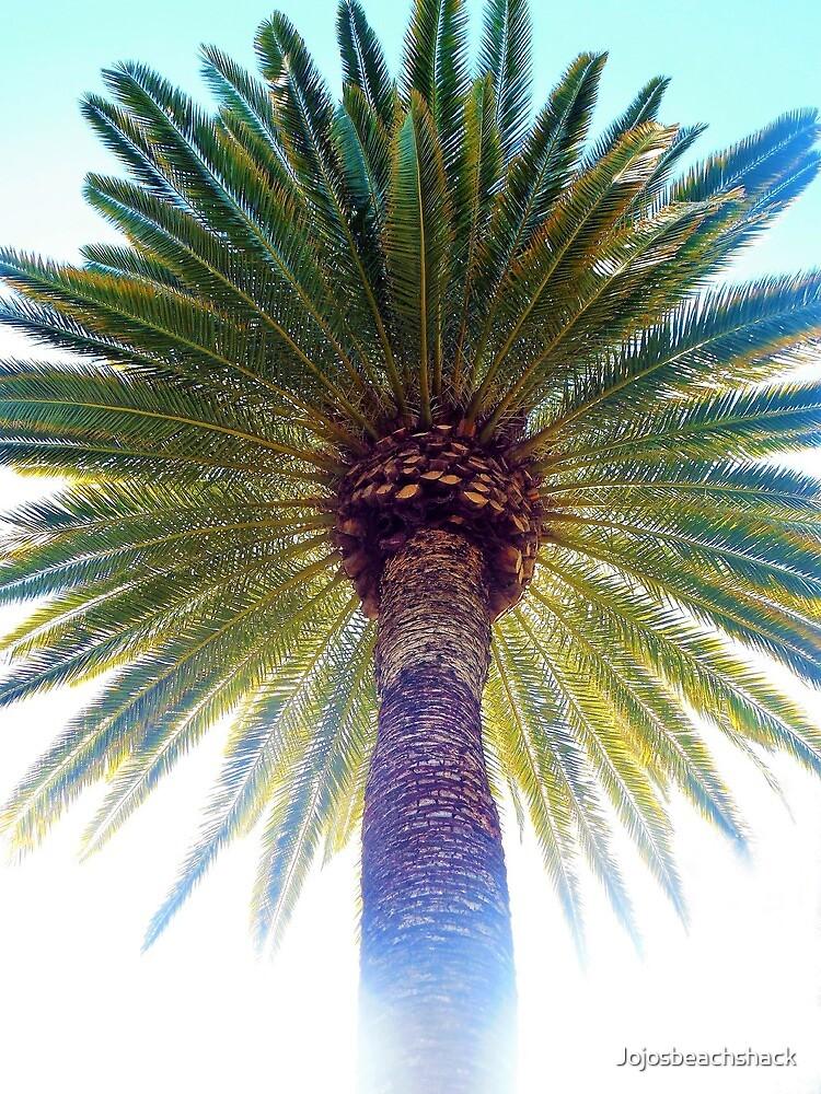 Mystic Palm by Jojosbeachshack