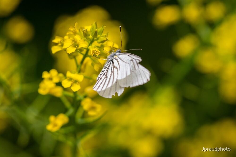 Butterfly by Jpraudphoto