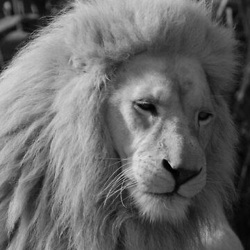White Lion by jgregor