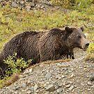 Bears of Denali 1 by jgregor