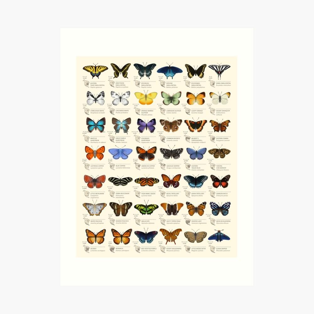 Butterflies of North America Art Print