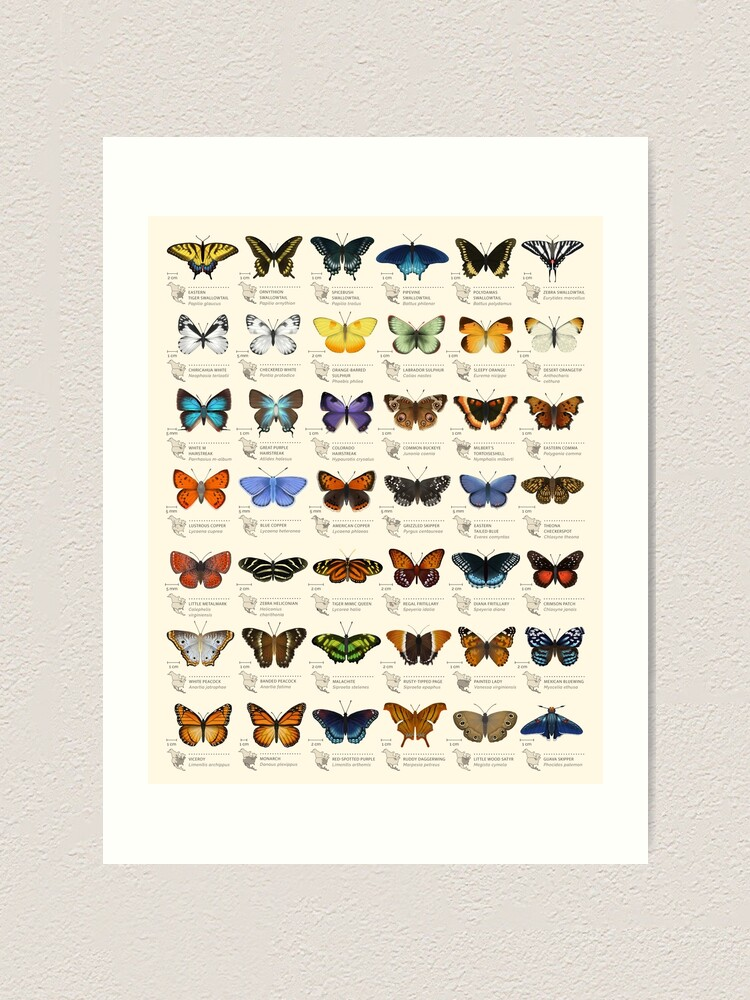 Alternate view of Butterflies of North America Art Print