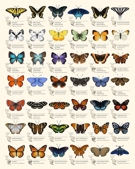 Quot Butterflies Of North America Quot Poster By Eleanorlutz